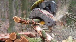 Wycinka drzew – nowe prawo z problemami BIZNES, Prawo - W połowie czerwca weszła w życie nowelizacja zaostrzająca przepisy dotyczące wycinki drzew, a od 17 lipca br. obowiązuje nowe rozporządzenie ws. opłat za usunięcie drzew i krzewów.